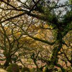 Whistman's Wood Wonder